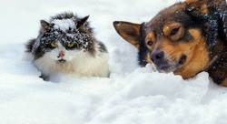 Cat and dog lying on the snow in cold winter