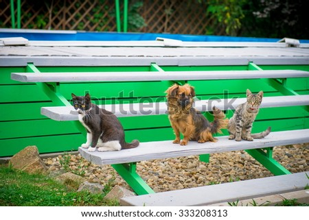 Cat and dog on the bench, friendly animals