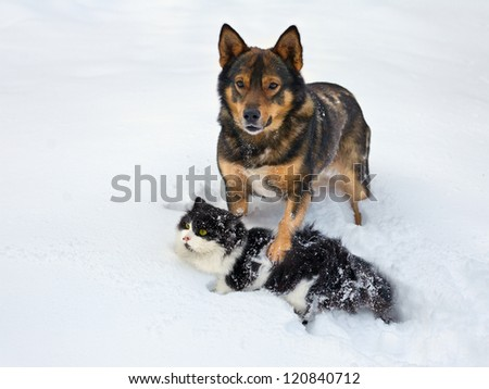 Cat and dog playing in the snow