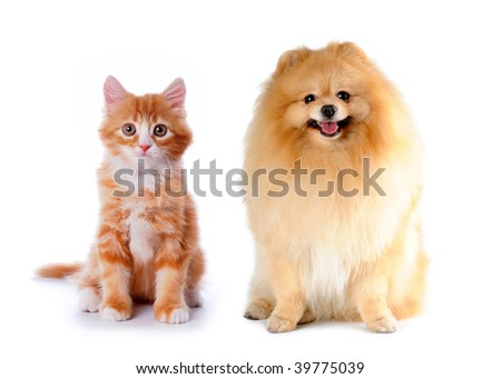 Cat and dog red color sitting isolated on white background