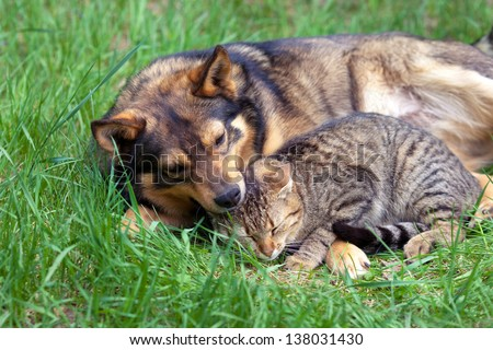 Cat and dog relaxing on the grass