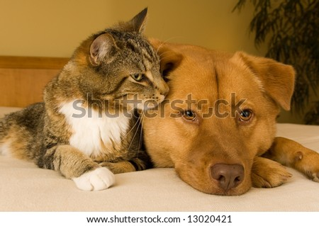 The minister's cat !  Stock-photo-cat-and-dog-resting-together-on-bed-13020421