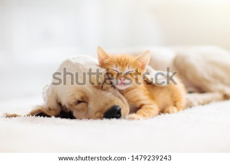 Photo of  Cat and dog sleeping together. Kitten and puppy taking nap. Home pets. Animal care. Love and friendship. Domestic animals.