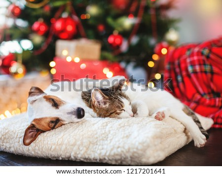 Cat and dog sleeping under christmas tree. Pets friends. Happy New Year