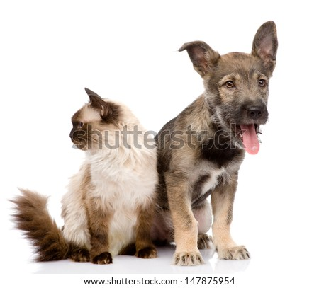 cat and dog together. focused on the cat. isolated on white