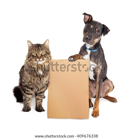 Cat and Dog together holding blank cardboard sign to enter your message onto #409676338