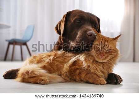 Cat and dog together on floor indoors. Fluffy friends #1434189740