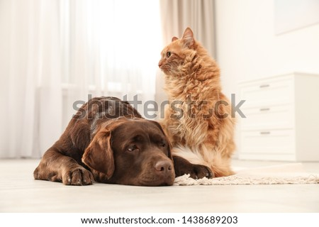 Cat and dog together on floor indoors. Fluffy friends #1438689203