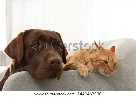 Cat and dog together on sofa indoors. Fluffy friends #1442462990