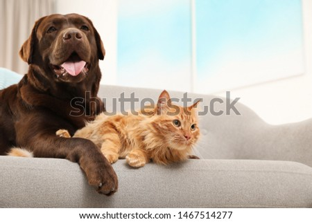 Cat and dog together on sofa indoors. Fluffy friends #1467514277