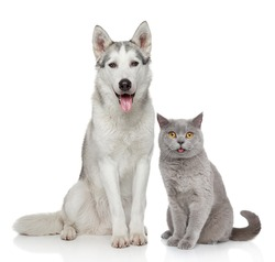 Cat and dog together posing on a white background