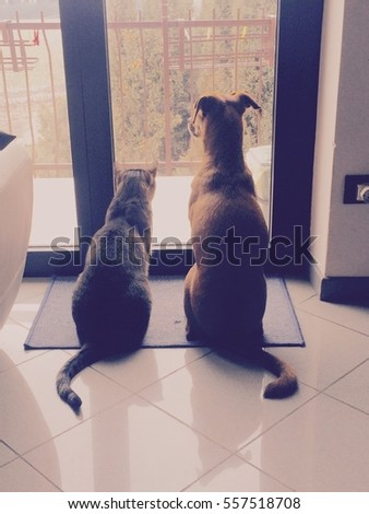 Cat and dog waiting their best friend!