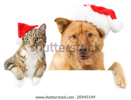Cat and Dog with red hats above white banner