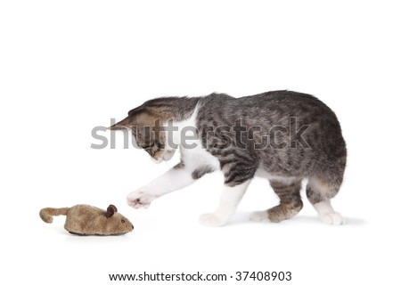 Cat and Fake Mouse on White Background