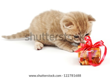 cat and gift isolated on white background