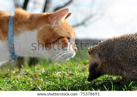 cat and hedgehog - stock photo