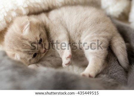 Cat and kitten lying and hugging #435449515