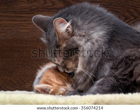 Cat and kitten. Mother and child. Mom hugging baby. Love, family, affection. The cat is gray, fluffy. The kitten is small, white and red. Background board. Cats lie on the fur. Snouts large.