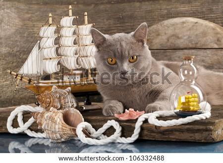 Cat and marine paraphernalia - stock photo