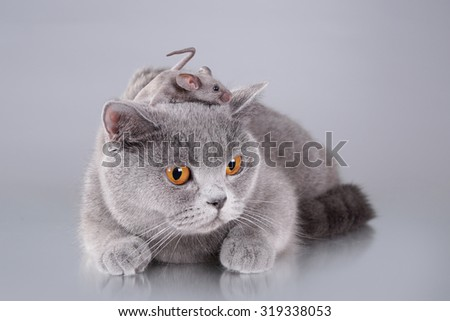 Stock Photo Cat and mouse
