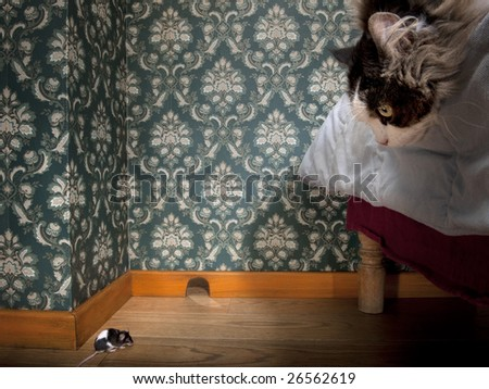 Cat and mouse in a luxury old-fashioned room