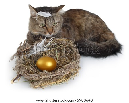 Cat and nest with golden egg at white background