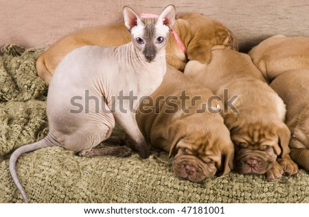 Cat and puppies resting together on bed