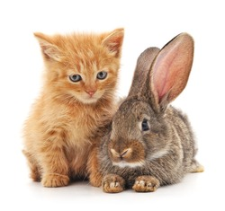 Cat and rabbit isolated on a white background.