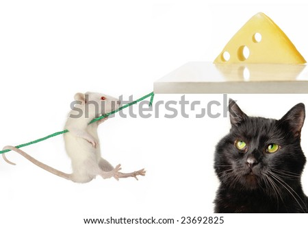 Cat and rat on a white background
