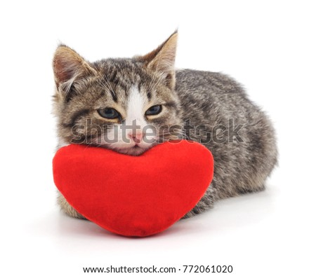 Cat and red heart isolated on a white background. #772061020