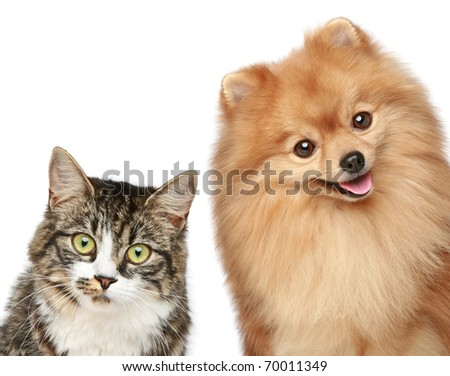 Cat and Spitz puppy on a white background