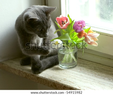 cat and tulips on windowsill