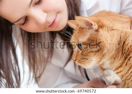 cat and vet - stock photo