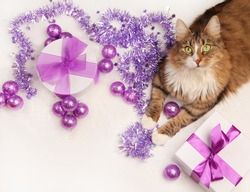 cat and violet christmas present on white background