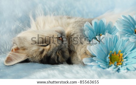 Cat asleep amongst flowers