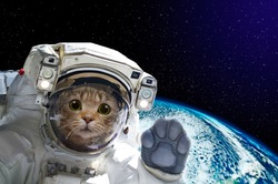 Cat astronaut in space on background of the globe. Elements of this image furnished by NASA.