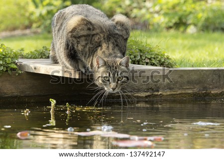 Cat at pond edge