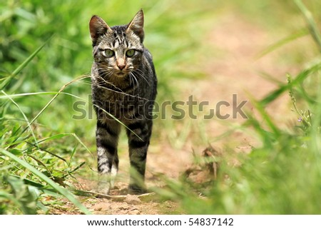 Cat at the Bigodi Wetlands in Uganda - The Pearl of Africa