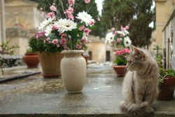 Cat at the cemetery among flower pots and old plants