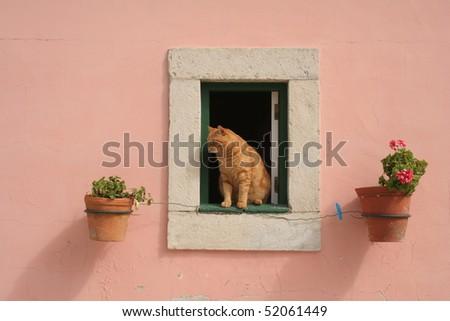 Cat at window.