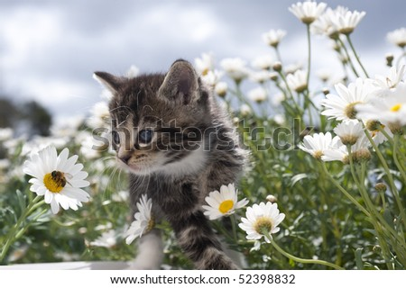 Cat baby between blooms observes bee - stock photo