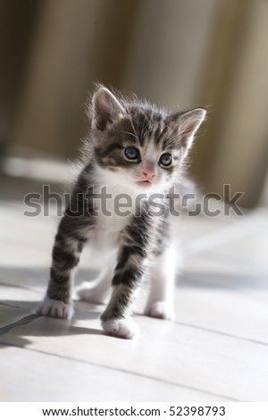 cat baby in back light
