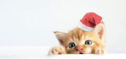 Cat baby tabby Kitten Cute Beautiful With christmas hat on white background