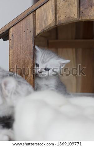 cat babycat  petcat cats