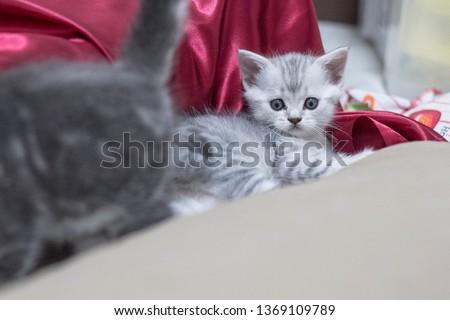 cat babycat  petcat cats #1369109789