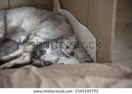 cat babycat  petcat cats #1369109792