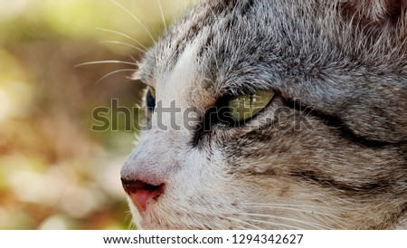 Cat background / The cat or domestic cat is a small carnivorous mammal. #1294342627