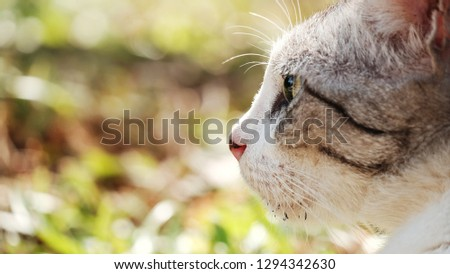 Cat background / The cat or domestic cat is a small carnivorous mammal. #1294342630