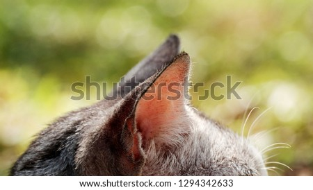Cat background / The cat or domestic cat is a small carnivorous mammal. #1294342633
