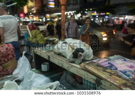 cat bangkok capital of thailand indochina asia travel #1031508976